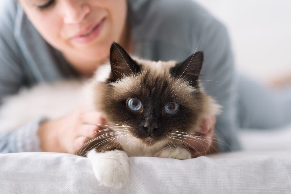 Here are some of your cat's strange behaviours explained - from kneading to eating grass