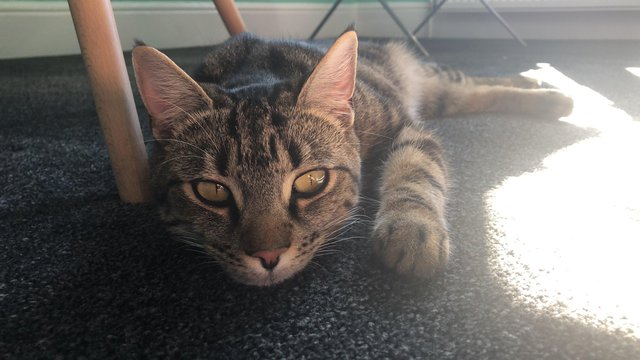 Cat Shelter In Portsmouth Shocked By Surprise Donation From Pets At Home Portsmouth The News