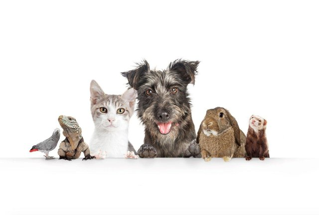 You could win a £50 voucher by entering The News' exciting Top Pet competition, which launches today