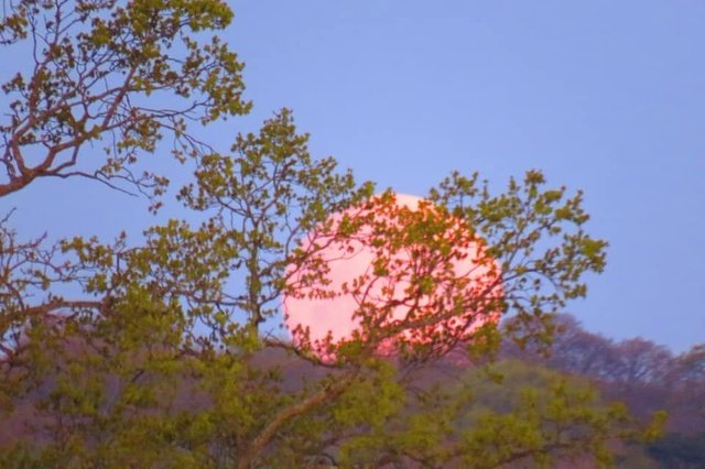 Portsmouth Super Pink Moon: Richard Smith got this epic shot of the Super Pink Moon over the South Downs, from Havant
