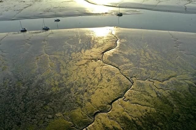 Solent mudflats. Picture: Mark Cox