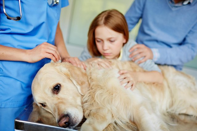 Alun's dog was traumatised and ended up at the vet. Picture: Shutterstock