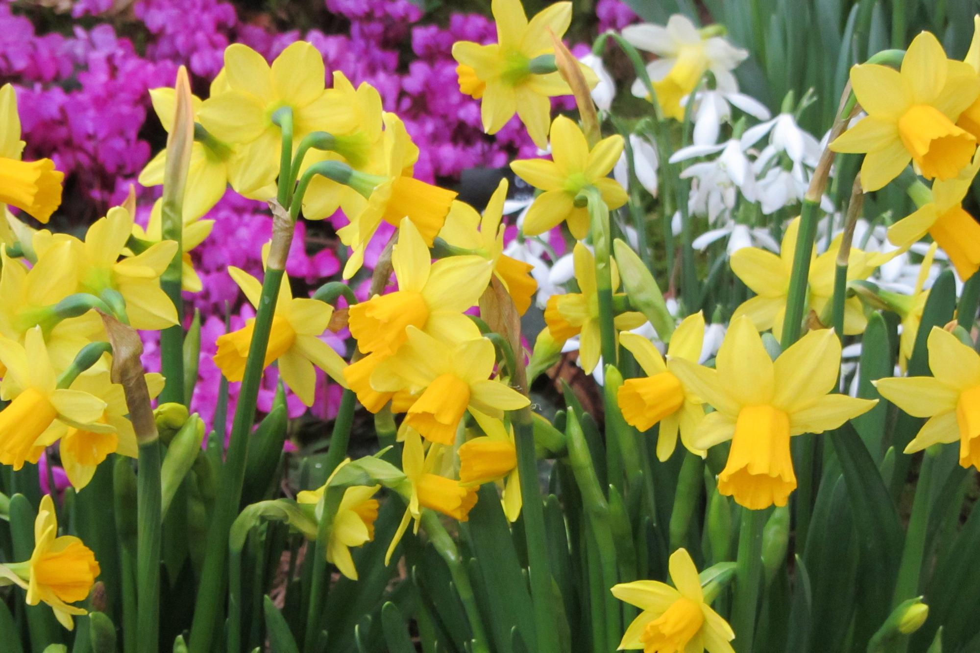 Make winter colourful with these blooming plants | Gardening