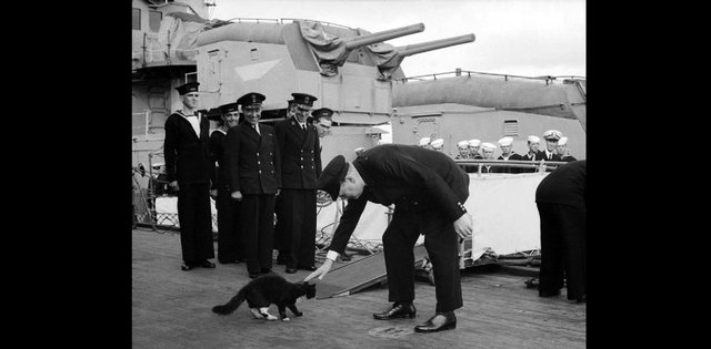 Blackie the cat meets Churchill aboard the HMS Prince of Wales. Picture: Wikimedia