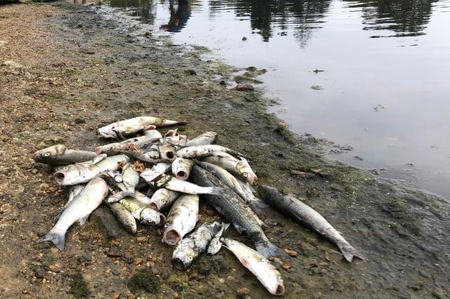 Hundreds of fish died in Alver Creek during the heatwave last summer. Picture: Richard Lemmer